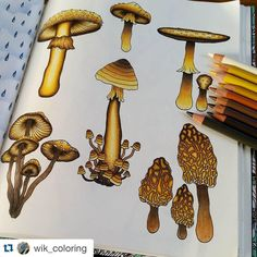 Dont you just love golden mushrooms?!Fun and fantastic coloring made by @wik_coloring (and the page can be found in my coloring book Dagdrömmar). #dagdrömmar #daydreams #hannakarlzon #adultcolouring #målarbok #coloringbook #coloring #repost Buy my books at www.penstore.com