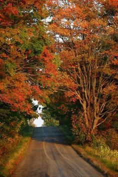 Upstate New York. I miss it during this time of year. Leaves changing, a nip in the air, trail riding in the woods. Vie Simple, Autumn Scenery, Upstate New York, Seasons Of The Year, Fall Pictures, The Great Outdoors, Countryside, Beautiful Places, Country Roads