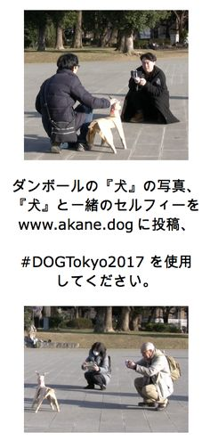 Japanese Artist Akane Takayama exhibited her latest Art Installation project Sculpture on & November 2017 at Ueno Park, Tokyo, Japan. Dog Sculpture, Sculptures, Ueno Park, Takayama, Japanese Artists, Public Art, Installation Art, Tokyo, Selfies