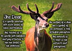 deer spirit animal - Google Search