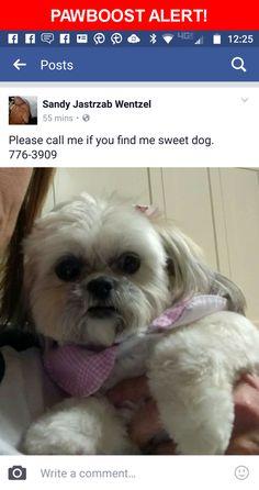 Please spread the word! Ginger was last seen in Pensacola, FL 32507.    Nearest Address: Near Marlinspike Dr & Binnacle Pl