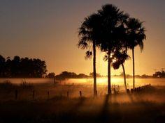 Chaco, Paraguai - Por aqui, chamamos de Pantanal, mas no país vizinho o nome dessa região rica em fauna e flora deriva da palavra ZUNILDA MORQUILLAS/CREATIVE COMMONS