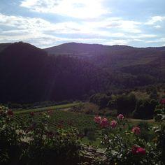 Chianti vineyards in Tuscany.