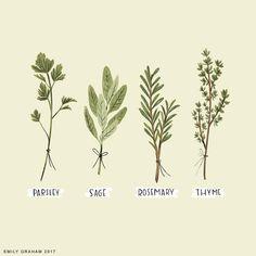 "6 Likes, 1 Comments - Emily Graham (@emilygrahamillustration) on Instagram: ""A little nod to Simon & Garfunkel. #herbs #illustration #parsley #sage #rosemary #thyme…"""