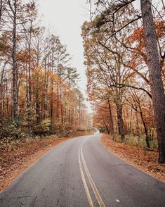 road between autumn forest fall drive Autumn Cozy, Autumn Forest, Fall Wallpaper, Autumn Photography, People Photography, Hello Autumn, Autumn Inspiration, Autumn Leaves, Red Leaves