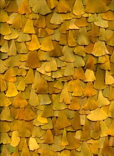gingko leaves: shape, color, value, texture Patterns In Nature, Textures Patterns, Color Patterns, Nature Pattern, Organic Patterns, Art Patterns, Design Textile, Shades Of Yellow, Mellow Yellow