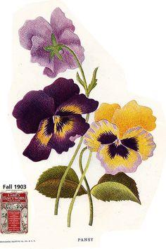 Ladies fwm pansy 1903 by Embroiderist, via Flickr Hand Work Embroidery, Free Machine Embroidery Designs, Silk Ribbon Embroidery, Crewel Embroidery, Embroidery Patterns, Folk Art Flowers, Flower Art, Cactus Flower, Flowers Garden