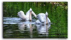 Vogelpark Walsrode  #Walsrode #Vogelpark #Germany #Deutschland #Schwan #Vogel #Tier #Bird #Flickr #Foto #Photo #Fotografie #Photography #Travel #Reisen #德國 #照片 #出差旅行 #Urlaub