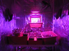 4' x 4' indoor greenhouse with reflective internal material. Growing vegetables and herbs both hydroponically and traditional soil mediums. 90w GrowUFO LED Grow Light - costs only about $4.50 a month to operate!!     green houses are going to improve our value of life.