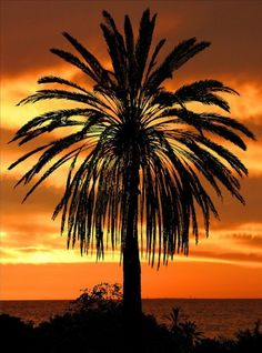 beach sunset with palm trees drawing. palm tree at sunset tropical beach with trees drawing