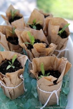 Start Seedlings #DIY #gardening