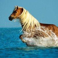 Gepind Van Kepguru Horse P Os Horse Pictures Dogs Wallpaper Desktop Horse Wallpaper