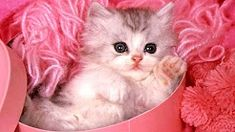 Image detail for -Pink Cat Wallpaper Cute Kittens, Cute Kitten Gif, Little Kittens, Cute Cats And Kittens, I Love Cats, Crazy Cats, Kittens Meowing, Chat Rose, Baby Animals