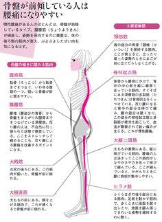 慢性的な腰痛に悩まされるかどうかは、普段の姿勢で決まります。壁を背にして立ったとき、腰に手がすっと入るのが腰に負担のかかりやすい「反り腰」。腹筋など「体の前側の筋肉」と、姿勢を支えるべき「体の後ろ側の筋肉」のバランスの崩れが原因となり、…