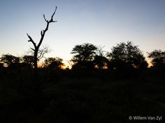 A Walk in the Thabazimbi Bushveld Provinces Of South Africa, Minding My Own Business, Amazing Sunsets, Wildlife Photography, Outdoor Activities, Good Times, Lush, Fields, Exotic