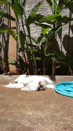❤ cachorro e plantas.