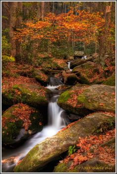 ~~Code Orange ~ autumn at Roaring Fork, Great Smoky Mountains National Park, Tennessee by Charlie Choc~~ Great Smoky Mountains, Chutes Victoria, Beautiful World, Beautiful Places, Smoky Mountain National Park, Smokey Mountain, Smoky Mtns, Mountain Park, Photos Voyages