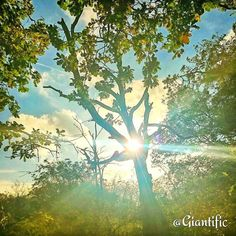 Some sunshine for you guys on this rainy monday  --------------------------- #giantific #sun #rain #nature #tree #green #forest #monday #positive #love #blues #winter #autumn #europe #dutch #nederland #holland #traveling #travelling#travel #traveltheworld#travelblogger #traveljunkie#gopro#goprooftheday #goprohero #sky_sultans#reizen #landscape