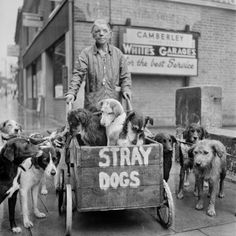 Stray Dogs, London (1962) by Evelyn Hofer - Martin Parr's 'Strange and Familiar' at the Barbican