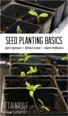 If you're planting a garden, you'll need to decide if you're planting seeds or seedlings. Here's a look at how to save money and get started early by planting seeds.