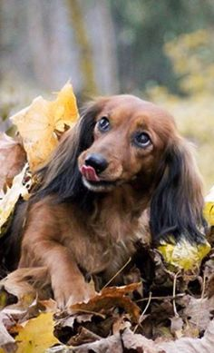 ❤️ Really you have to try this. Doxie