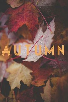 Goodbye Summer. Hello Fall! Who's glad to see the changing leaves and cooler temperatures of #Autumn? Check out some great images and quotes for the new season upon us! #StayConnected @Juil