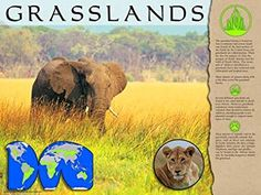 Poster: Pictures and text describe the grasslands biome. Includes a world map showing distribution. Grassland Biome, Process Of Change, Poster Pictures, Biomes, School Projects, Elephant, Science, Map, Activities