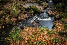 Autum in Padley Gorge - Peak District