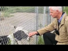 Dog care - In Defence of Dogs - John Bradshaw Dog Care, All Dogs, Dog Training, Dog Breeds, Goodies, Puppies, Random, Reading, Youtube
