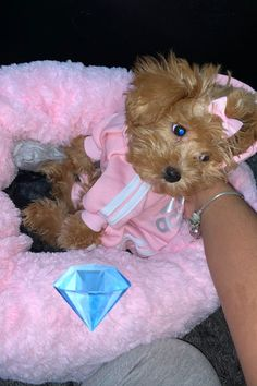 Super Cute Puppies, Cute Baby Dogs, Cute Little Puppies, Cute Dogs And Puppies, Cute Little Baby, Doggies, Cute Animals Puppies, Cute Funny Animals, Cute Baby Animals