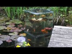 Building a FishTower in the Pond - YouTube