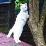 Special needs kitty Harvey has come a long way from the a tiny kitten rescued after his owner put him on a Craigslist type site to get rid of him. Now he frolics like any other cat in a specially designed garden at his foster home.