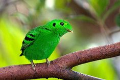 Beautiful Colorful Birds Beautiful Colorful Birds