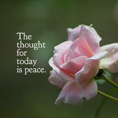 """DAY 61 Mar. 31: The thought for today is PEACE. """"Practice watering seeds of joy and peace and not just seeds of anger and violence, and the elements of war in all of us will be transformed,"""" says T..."""
