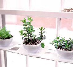 indoor tea gardens