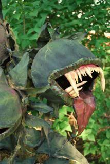 Asphodelus Thanatos (Greek Death Flower) - HauntForum you're kidding! Is this for real?