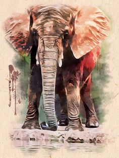 Baby Elephant Canvas Print featuring the painting African Elephant Painting by Scott Wallace Elephant Artwork, Elephant Canvas, Baby Elephant, Elephant Design, Canvas Prints, Art Prints, African Elephant, Watercolor Portraits, Fine Art America