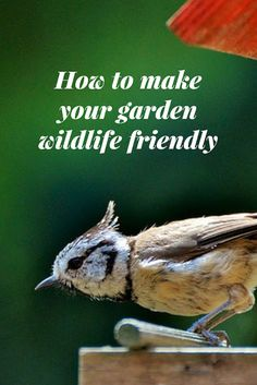 How To Make Your Garden Wildlife Friendly Glasgow, Organic Gardening, Gardening Tips, How To Attract Birds, Rooftop Garden, Garden Villa, Home Landscaping, Food Presentation, Garden Planning