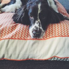 Our customized dog beds make both hounds and their humans happy!