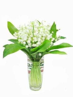 Bouquet of Lily of the Valley Flowers - 24H x 18W - Peel and Stick Wall Decal by Wallmonkeys Simply Peel and Stick! Remove and re-use.. Sticks to virtually any painted surface.. Can be moved again and again. No professional installation required.. Printed, packed, and shipped in the USA!. Please be sure you ordered the right size for your intended use..  #Wallmonkeys_Wall_Decals #Home