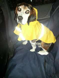 1000+ images about Dogs in Raincoats on Pinterest | Raincoat, Dog ...