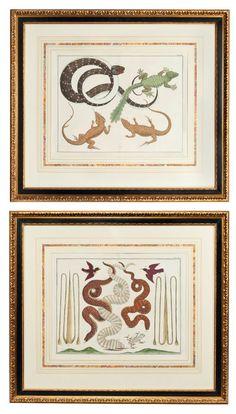 Albertus Seba, Hand-coloured engravings of snakes and reptiles. £ 1,500 - £ 2,000