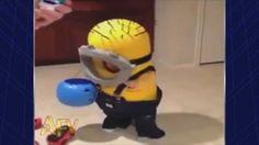 Cute Toddler Halloween Fail | AFV (+playlist)