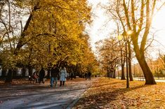People Walking On Gray Concrete Pathway Between Trees During Daytime Picture. People Walking on Gray Concrete Pathway Between Trees during Daytime. Tao, Concrete Pathway, Fun First Dates, Dry Leaf, Autumn Photography, Sunset Photos, Pavement, Free Pictures, Couple Pictures