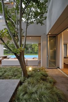 Ornamental grass makes a soft groundcover under a tree, with no mowing required. Franchesca Watson | Garden Designer