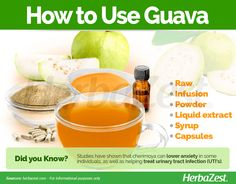 Guavas are a widely consumed fruit because of their sweet taste. Its leaves and bark are also full of nutrients and health benefits. Guava Benefits, Guava Fruit, Guava Tree, Guava Leaves, Lower Blood Sugar, Health And Beauty Tips, Herbal Remedies, Herbalism, Nutrition