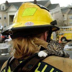 Risultati immagini per fireman rescue cat