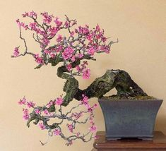 Houseplants That Filter the Air We Breathe Kunio Kobayashi's Shunka-En Bonsai Museum Japanese Flowering Apricot Prunus Mume Ume Ph. Flowering Bonsai Tree, Bonsai Tree Types, Indoor Bonsai Tree, Bonsai Plants, Bonsai Garden, Bonsai Trees, Mini Bonsai, Ikebana, Prunus Mume