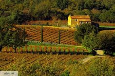 French vineyard photo - Bastide in Provence vineyard - Massif des Maures area Provence, Images Of France, Chateauneuf Du Pape, French Countryside, Farm Life, Where To Go, Trip Planning, Vineyard, Photos