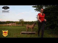 Trick Dog Class 19 - Pedestal - Pódium - Novice Trick Dog Training with Cimarron Uruguayo dogs from Cerberus Illusion kennel